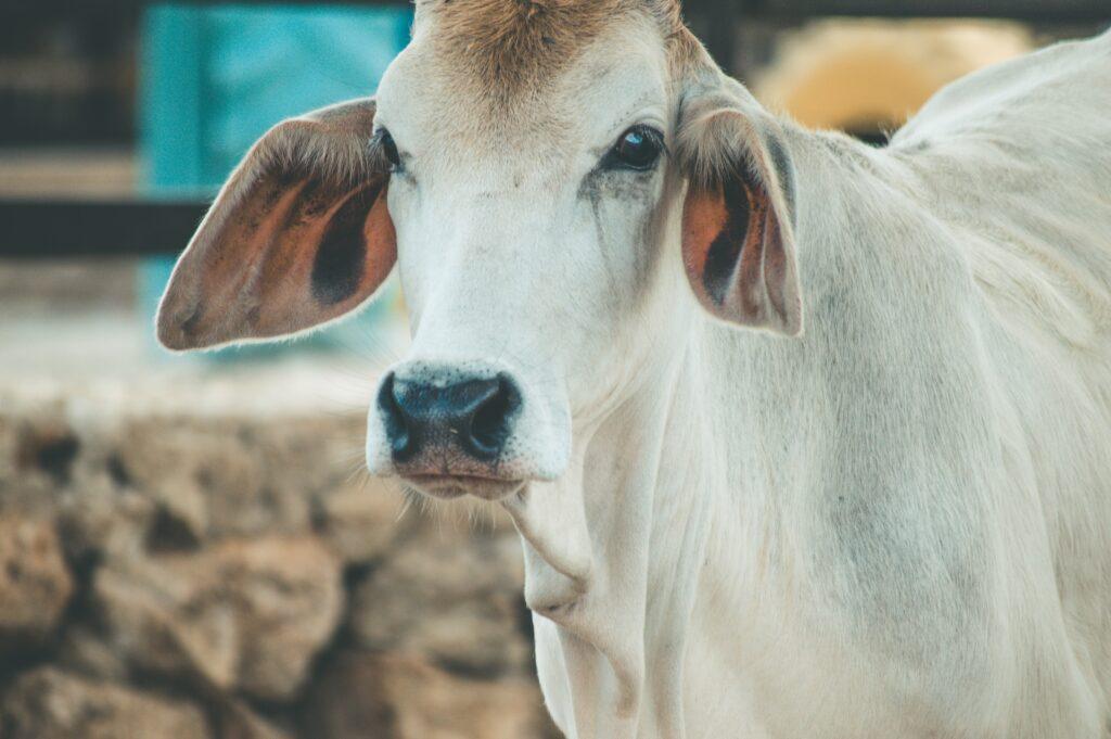 Carne Etica - allevamento nel rispetto degli animali
